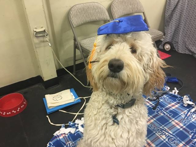 Pricing - Dog Daycare, Boarding, and Training and Wags and Wiggles