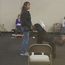 Jenn Wong - Rancho Santa Margarita Dog Trainer