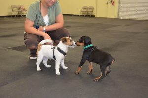 Puppy Training Tips, Classes, and Programs - Wags & Wiggles Tustin, CA