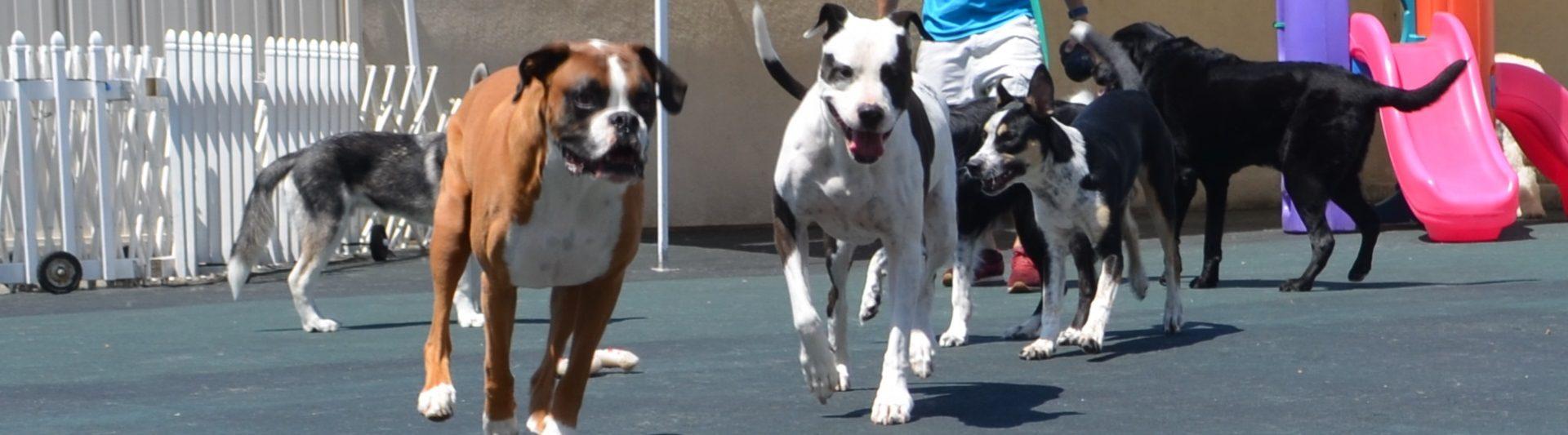 Orange County Dog Training, Daycare, & Boarding | Wags & Wiggles