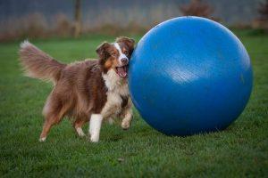 Treibball Dog Sport