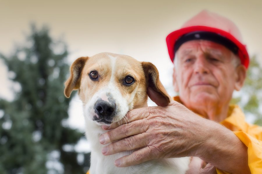 Wags & Wiggles Emergency Pet Preparedness In Facility and In