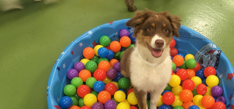 Wags & Wiggles | Dog Boarding