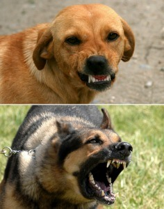 Wags & Wiggles | Aggressive Dogs