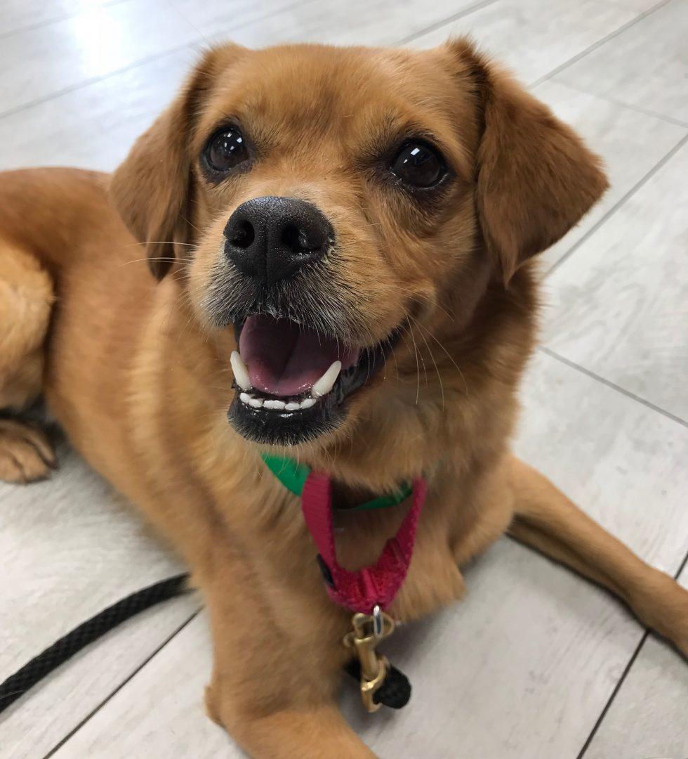 Tustin Dog Rescue