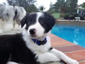 Wags & Wiggles | New Puppy