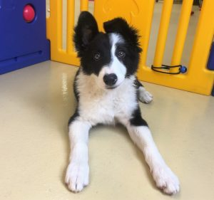 Wags & Wiggles | Dog Daycare