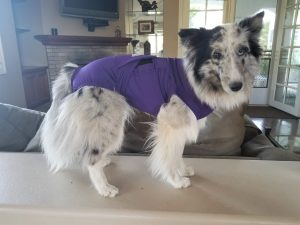 Wags & Wiggles | Fancy Gets Spayed