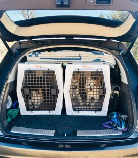 Wags & Wiggles | Keeping Your Dog Safe in the Car