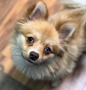 wags-wiggles-dog-daycare-boarding-training-rancho-santa-margarita-tustin-basic-dog-training